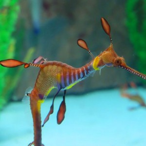 news-seahorseworld